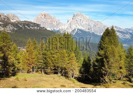 Larch wood and Le Tofane Gruppe Dolomiti Italy