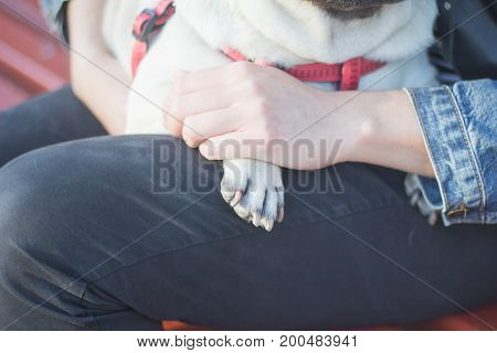 close up picture of pug pow in womans hand