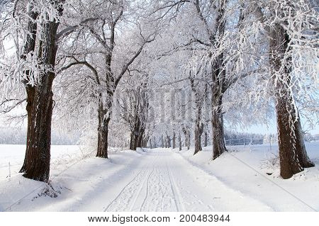 wintry landscape scenery with road way and alley vista