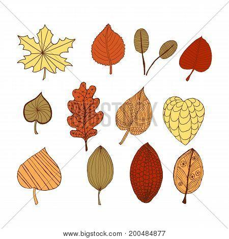 Set of autumn doodle decorative leaves. Eps 10