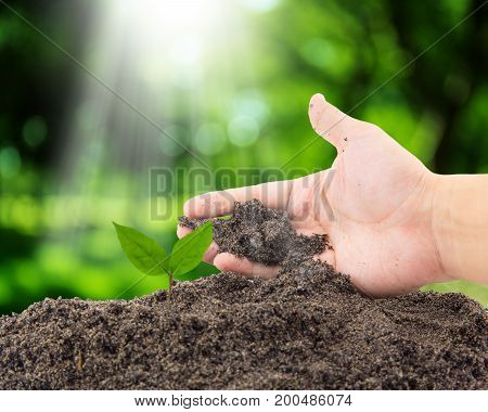 Hand Of Farmer Growing And Nurturing Tree Growing On Fertile Soil With Nature Background / Nurturing