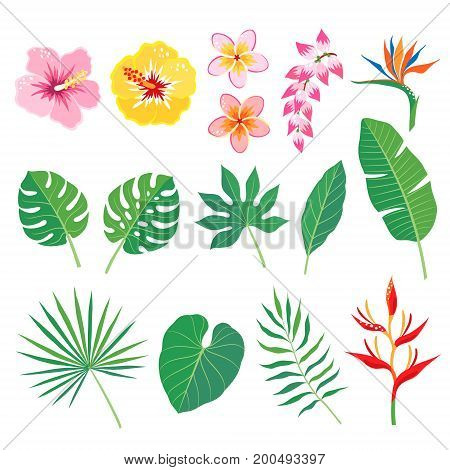 Set of tropical leaves and flowers isolated on white background