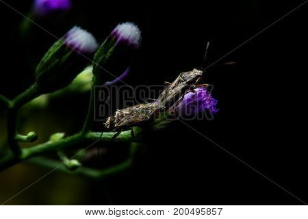 Insects mating on flower with close-up detailed view