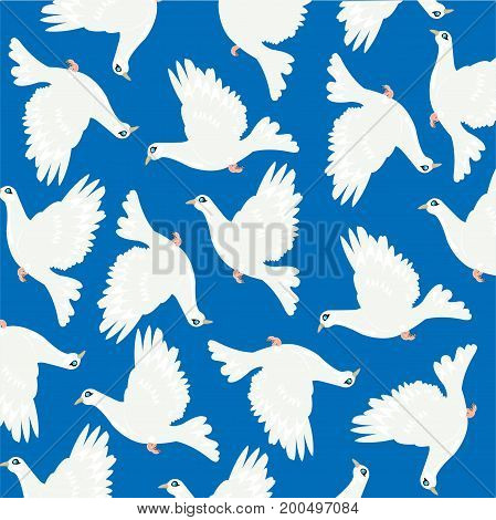 Birds dove on turn blue background is insulated