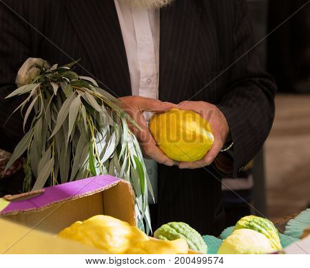 Sale of ritual plants on the traditional pre-holiday market in the capital of Israel, Jerusalem. The buyer chooses the citrus - etrog. Ancient Jewish holiday Sukkot