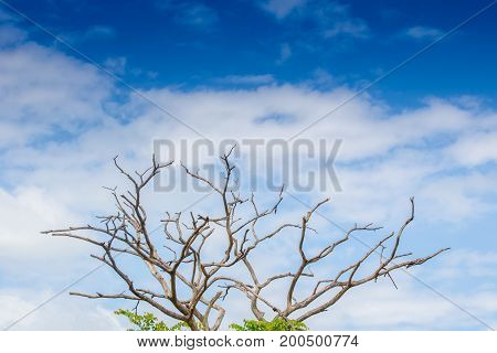 Dead tree isolated on blue sky background