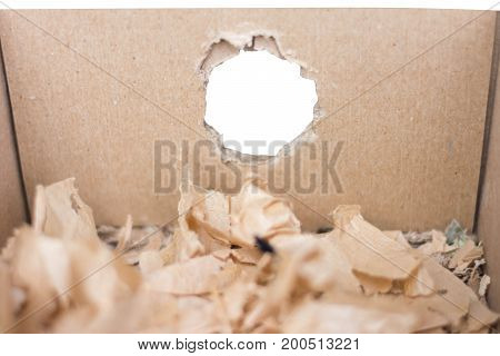 gnaw mark of mice on crate paper
