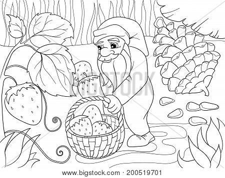 Coloring, cartoon, scene. Dwarf in the forest collects strawberries, berries. Vector illustration of nature