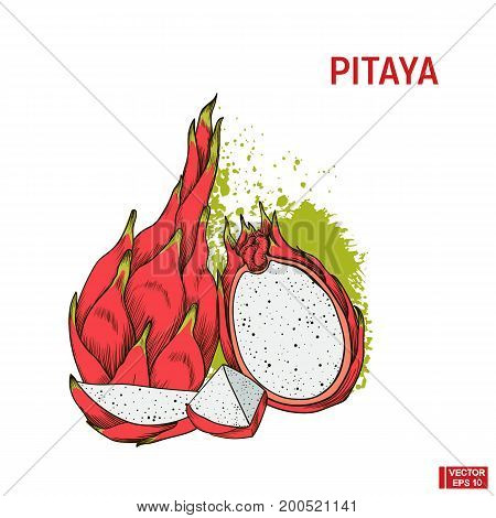 Fruit Color Sketch Of Pitaya.