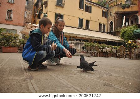 Pigeons fed by children on a pedestrian street in Venice crumbs of bread.