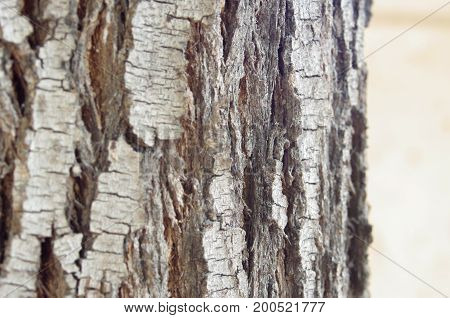 Bark of tree for textures or funds