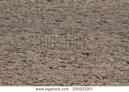 track racing texture hoofprints in the sand Hippodrome on a Sunny day