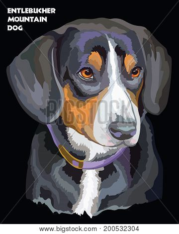 Colored portrait of Entlebucher Mountain Dog isolated vector illustration on black background