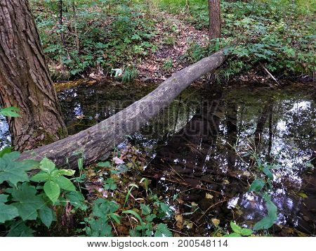 The small rivulet with branch across stream.