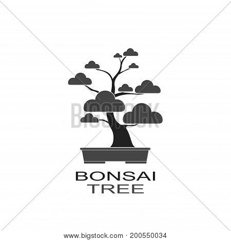 Bonsai icon decorative small tree growing in container. Japanese tree isolated on white background. Vector iilustration