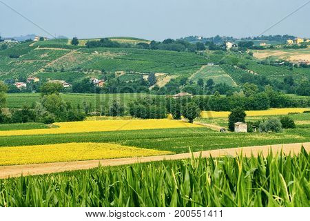 Rural landscape at summertime along the road from Ganaghello to Vicobarone (Piacenza Emilia Romagna Italy) in the Tidone valley