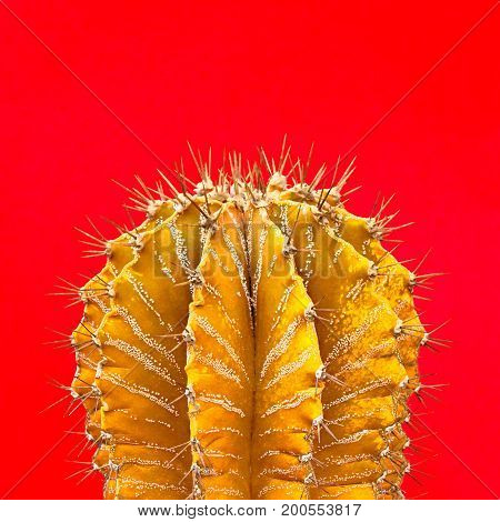 Cactus Yellow. Art Gallery Fashion Design. Minimal Stillife. Concept on red background. Detail