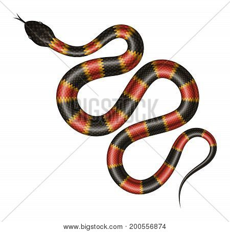 Coral snake vector illustration. Isolated tropical snake on white background.