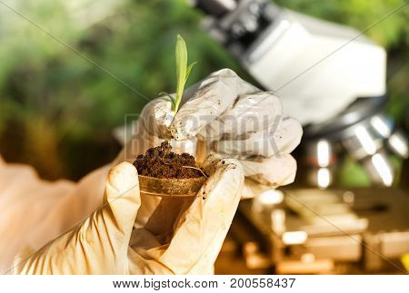Close up of biogist's hand with protective gloves holding young plant with root above petri dish with soil. Green background. Biotechnology plant care and protection concept