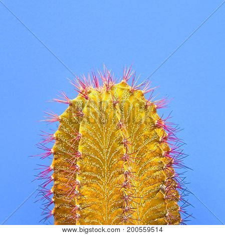 Cactus. Fashion Design Style, Minimal Stillife. Concept on blue background. Detail