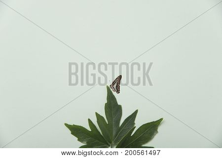 Creative nature green leaves with butterfly on pastel background.