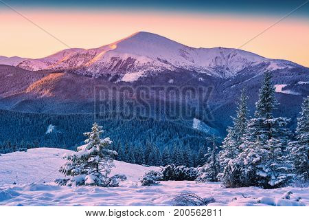 Forest On A Hill Of Hoverla
