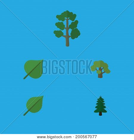 Flat Icon Natural Set Of Park, Forest, Hickory And Other Vector Objects