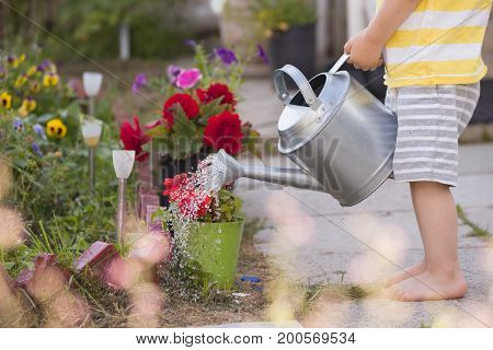 Closeup of child's hands holding metal watering can and watering flowers on a sunny summer day. Activities for children outdoors. Boy helping in a garden. Lifestyle.