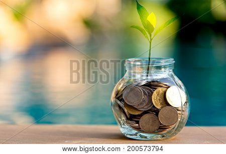 Savings money coin full of glass piggy. Plant Growing In Savings Coins. Investment Concept