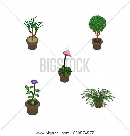 Isometric Flower Set Of Grower, Houseplant, Flower And Other Vector Objects