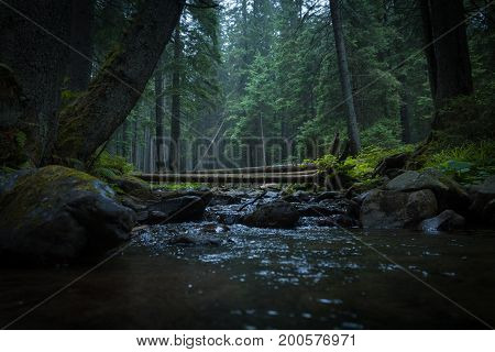 A river with a fallen tree in a coniferous forest. Mysterious forest in the fog.