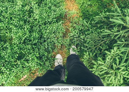 man walking in fir-tree forest , first person view