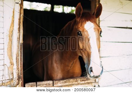 Picture of beautiful horse looking through window of stable