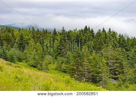 Green Golden Hillside Next To Thick Pine Forest, Mountains And White Fog In Distance