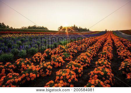 Biei Flower Fields