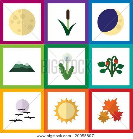Flat Icon Natural Set Of Lunar, Berry, Cattail And Other Vector Objects