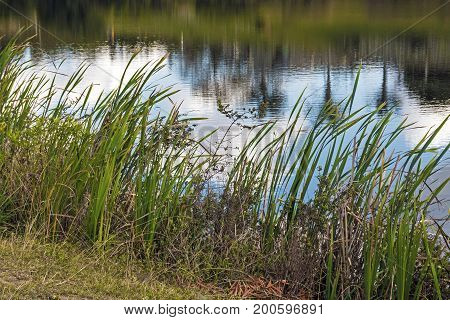 Green Grass Leaves Against Water Ripples And Reflections Background