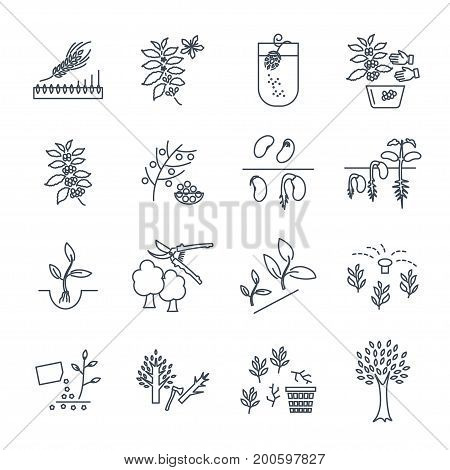 set of thin line icons plant herb grower coffee beans barley
