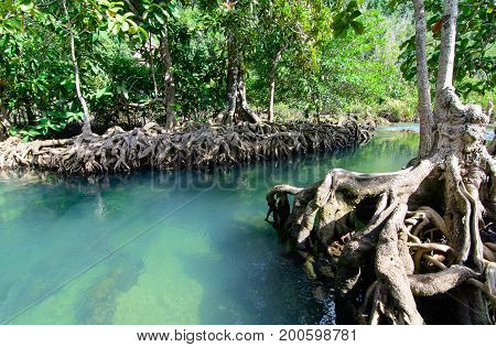 The Tha pom Klong Song Nam at Krabi at Krabi Thailand Is a clear blue water in the mangrove forest.Popular Tourist Attraction in Krabi Province.