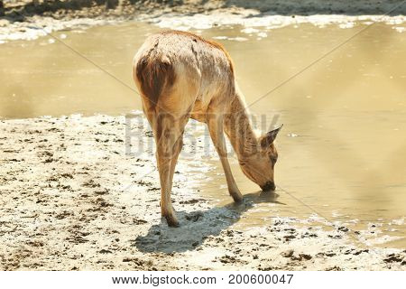 Cute young deer in zoological garden