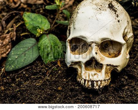 In front of human skull buried in the soil.The skull has dirt attached to the skull.concept of death and Halloween