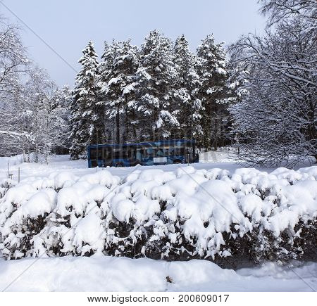 UMEA, SWEDEN ON MARCH 03. View of a snowy, wintry hedge on March 03, 2017 in Umea, Sweden. Local bus and snowy forest in the background. Editorial use.