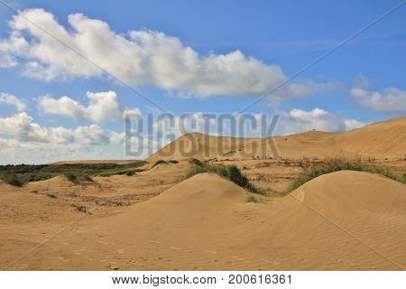 Sand dunes at the west coast of Denmark. Rubjerg Knude.