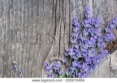 Lavender Flowers (lavandula) On An Old Wooden Background