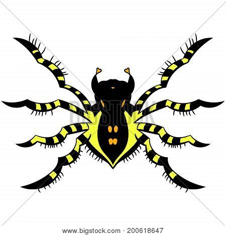 Yellow striped spider. vector illustration. Drawing by hand