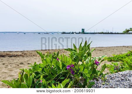 Marina Harbor Boats In The Distance In Lincolnville, Maine Small Village During Rain And Beach With