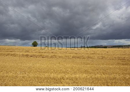 Stormy Skies And Straw