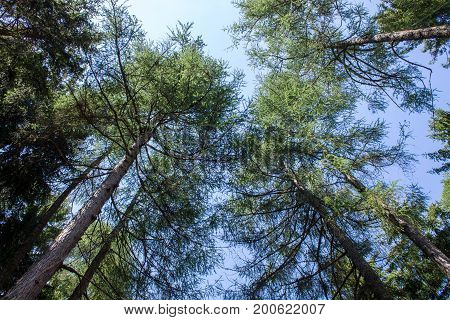 Trees converge in the center from the bottom up