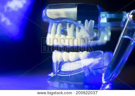 Dental Teeth Clinical Model