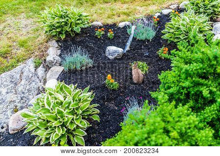 Aerial view of cute wild common cottontail rabbit with green plants in garden